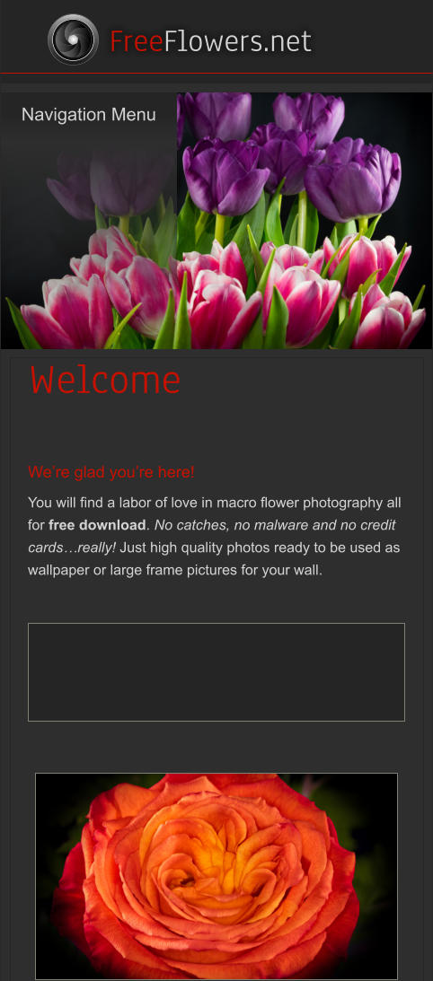 Navigation Menu    FreeFlowers.net Welcome   We're glad you're here! You will find a labor of love in macro flower photography all for free download. No catches, no malware and no credit cards…really! Just high quality photos ready to be used as wallpaper or large frame pictures for your wall. Navigation Menu